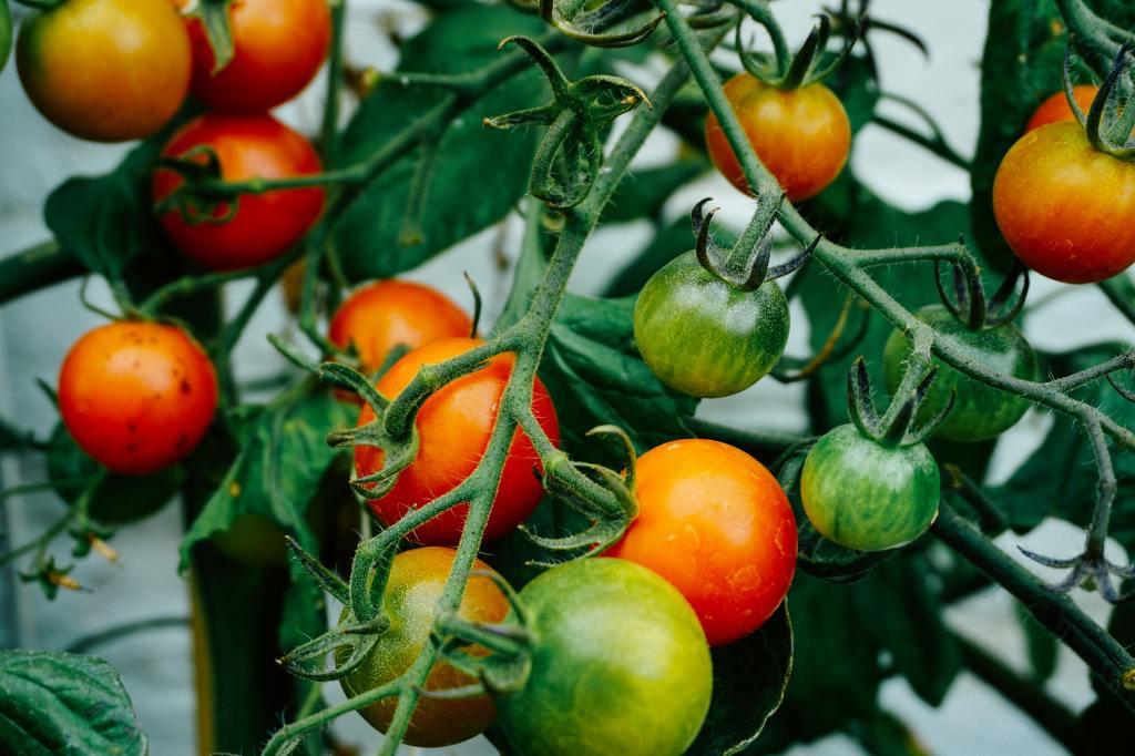 Denna bild har ett alt-attribut som är tomt. Dess filnamn är tomater.jpg